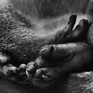 monkey toes by Bernie Rosser