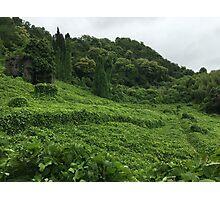 Green plant Photographic Print
