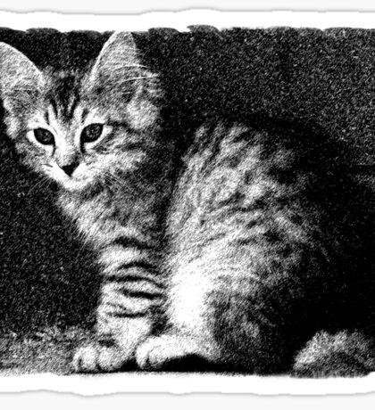 Kitten Cleo Sticker
