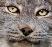 Canada Lynx Sticker
