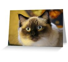 Beautiful RagDoll Cat Greeting Card