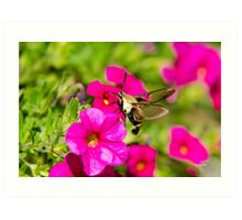 Hummingbird Moth Art Print