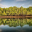 Rinca Island Reflections by Mieke Boynton
