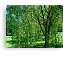 Under the Old Willow Tree- collaboration      ^ Canvas Print