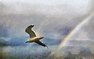 Seagull &  rainbow, Romsdalsfjord , Norway by David Carton