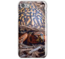 Male Box Turtle iPhone Case/Skin