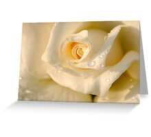 Close up of a beautiful and perfect white rose Greeting Card