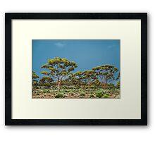 Goldfields Gimlets Framed Print