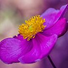 Anemone by Cathy Donohoue