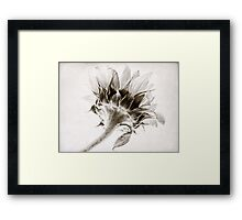 Sunflower Study #2 Framed Print