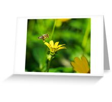 Honey Bee and yellow flower Greeting Card