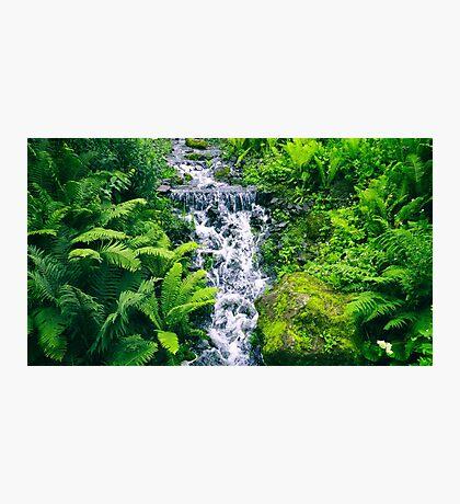 Green Heaven of Scotland Photographic Print