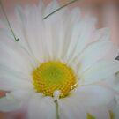 Dreamy Daisy by WeeZie