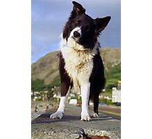 On the prom with Indy Photographic Print