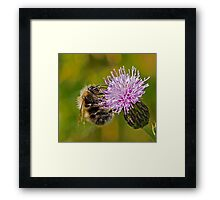 Bumble Bee on Thistle Head Framed Print