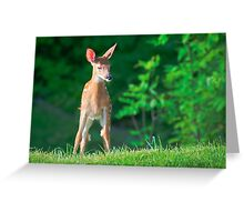 Pretty Fawn (White Tailed Deer) Greeting Card