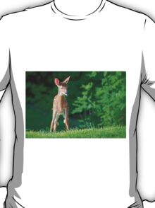 Pretty Fawn (White Tailed Deer) T-Shirt