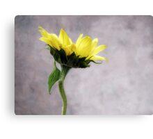 Sunflower #1 Canvas Print