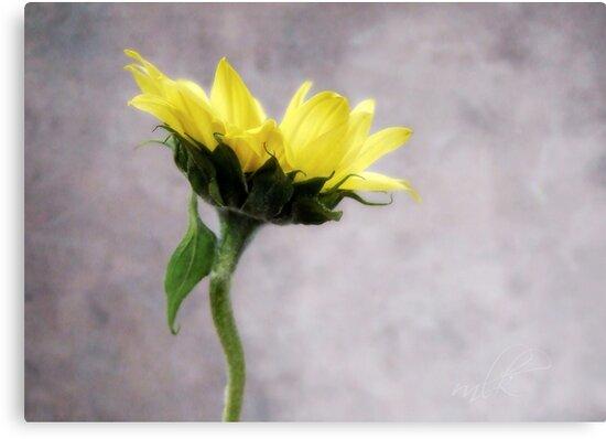 Sunflower #1 by LouiseK