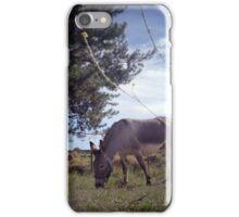 donkey harry iPhone Case/Skin