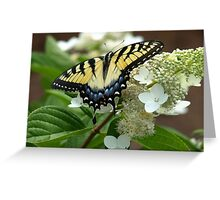 Yellow Tiger Swallowtail Postcards/Greeting Cards by Elisabeth and Barry King™ Greeting Card