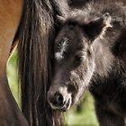 Pony Tales by Karen Peron