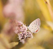 Nature Peeking Small Butterfly by alyphoto