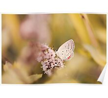 Nature Peeking Small Butterfly Poster