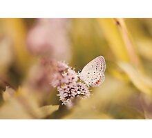Nature Peeking Small Butterfly Photographic Print
