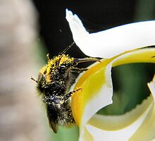 Abundance of pollen by missmoneypenny