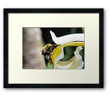Abundance of pollen Framed Print