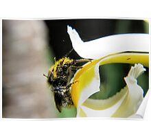 Abundance of pollen Poster