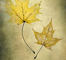 Two autumn leaves by JBlaminsky