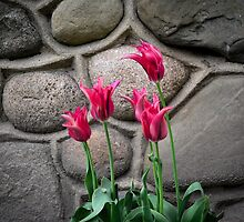 Pink Flowers with Stone Backdrop by Irena Paluch