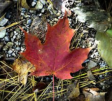 Maple Leaf by Irena Paluch