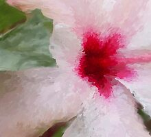 Close up Hibiscus by imagerially