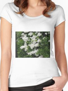 Pretty White Spirea Blossoms Women's Fitted Scoop T-Shirt