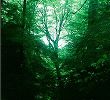 Emerald Glade by Seth  Weaver
