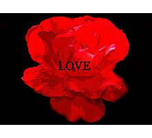Love and the red flower Photographic Print