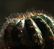 Web on Cactus (please view larger) by myraj