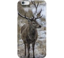 Twelve Point Stag in the Snow iPhone Case/Skin