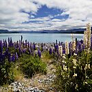 Pathway to lake Tekapo by Norman Repacholi