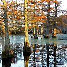 Hill's Lake In Autumn by WildestArt