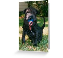 """Phebe, My Little Sharpi pup, and her """"bingkee"""",  Greeting Card"""