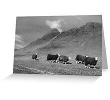 Herdwick sheep in Langdale Greeting Card