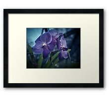 Nighttime in the Orchid House Framed Print