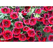 Red Flowers For You! Photographic Print