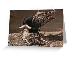 Mating season Greeting Card