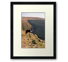 Indy at Aber Framed Print