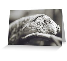 Southeastern Girdled Lizard Greeting Card